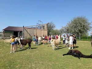 Lamas und 9a