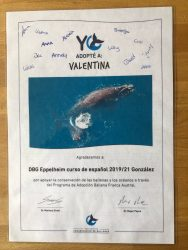 Adoptamos una ballena - Der Spanischkurs des DBG adoptiert einen Wal